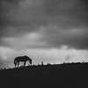 11-26-2020: Horse on a hill