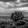 lone tree grwong between rocks in arizona desert