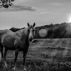 Beautiful  horse on the pasture at sunset in south carolina mountains