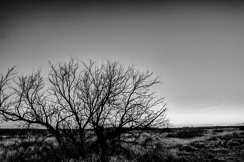 early morning with a lone tree branches in a new mexico desert