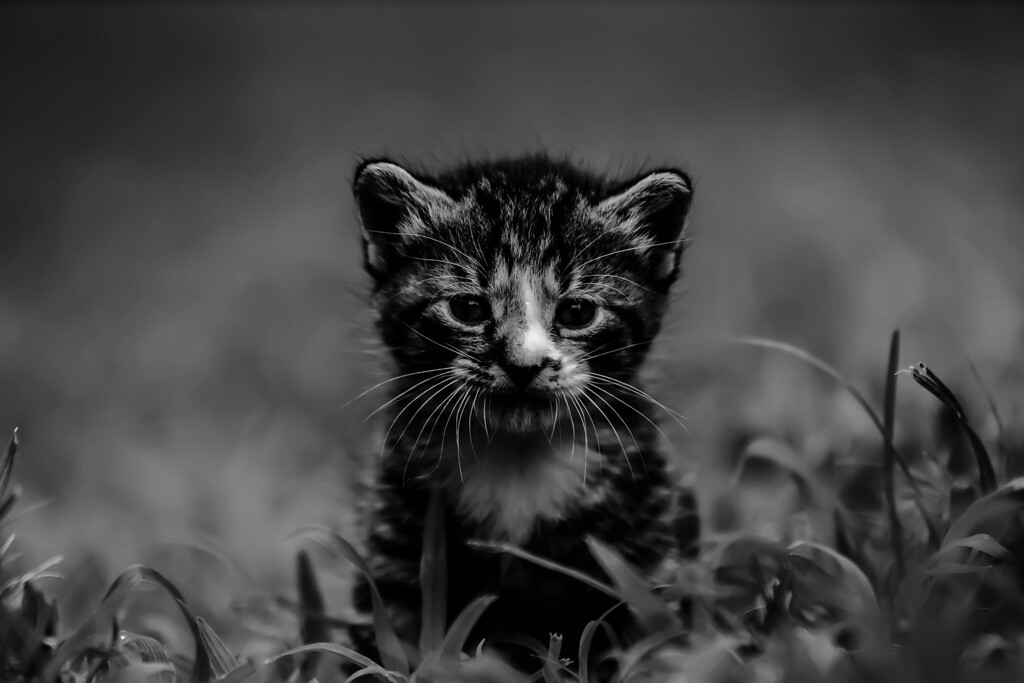 kitty in grass