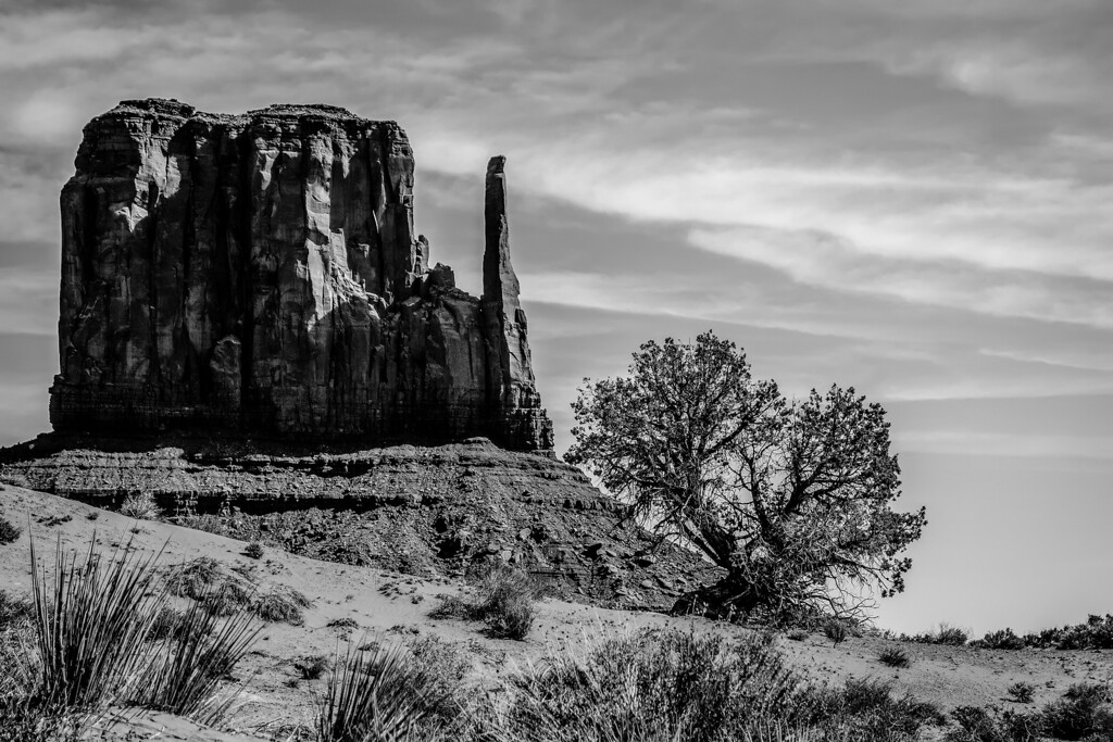 A tree and a butte in Monument Valley