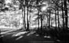 Sunrise - Morton Arboretum