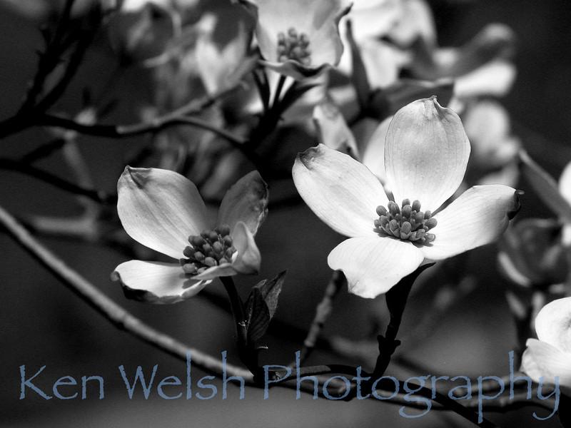 Morton Arboretum  © Copyright Ken Welsh