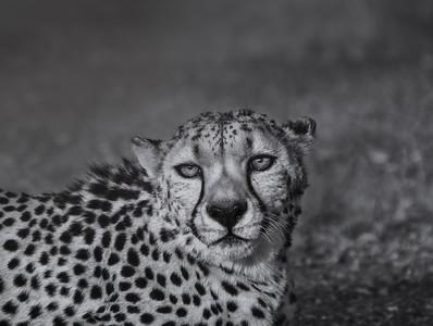 In the savanna B&N 7R45951