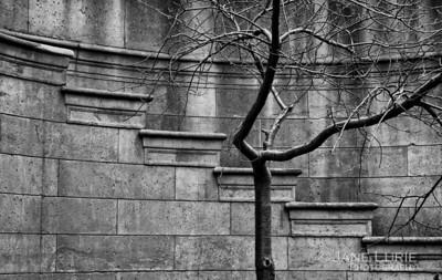 Tree, Palace of Fine Arts