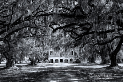 Southern Mansion and Live Oaks