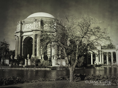 Palace of Fine Arts and Tree, San Francisco