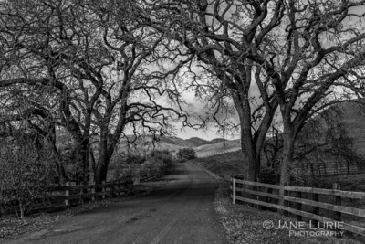 Henry Road, Carneros