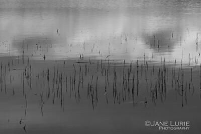 Reflections, Tomales Bay