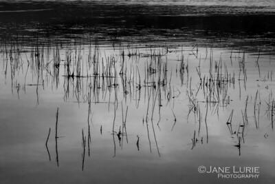 Tomales Bay Reflections