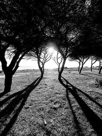La sombra se alarga