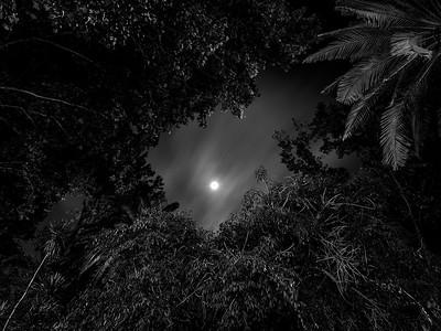 Noche de hombres lobo