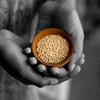 Quinoa - The wonder grain
