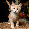 SPCA kitten at Bosley's November 2012 #4