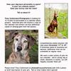 Calendar Casting Call - pet photographer in Squamish