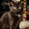 SPCA kitten at Bosley's November 2012 #3