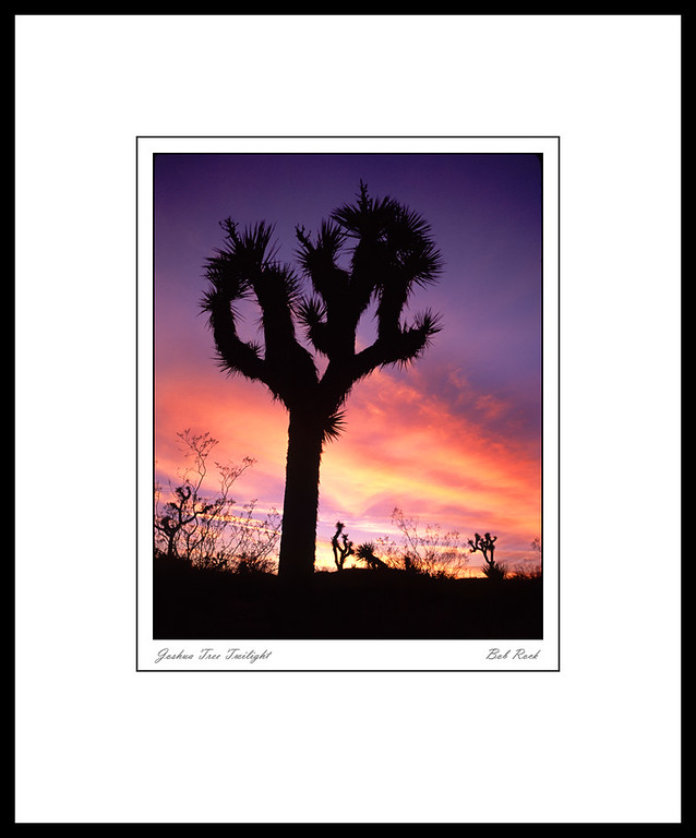 2533 Joshua Tree Twilight