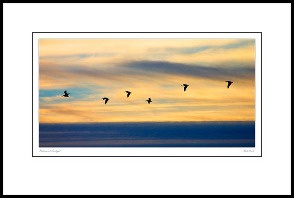 Pelicans in flight at twilight in Washington's Olympic National Park.