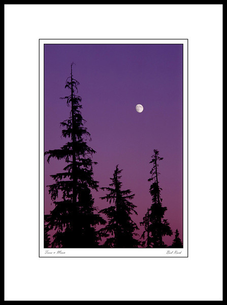 2106M Trees & Moon