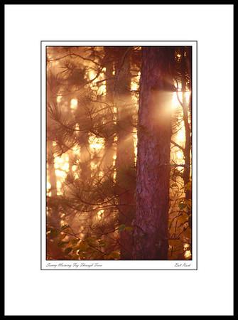 5706 Sunny Morning Fog Through Trees