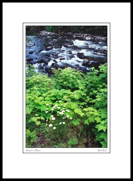 1673 Daisies & Stream