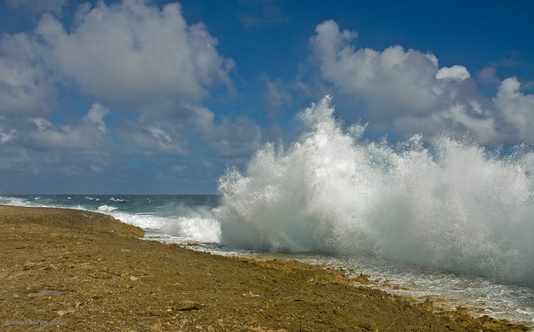 the splash, Bonaire's windward shores
