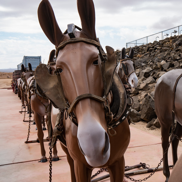 Twenty Mule Team on display at Borax Visitor Center