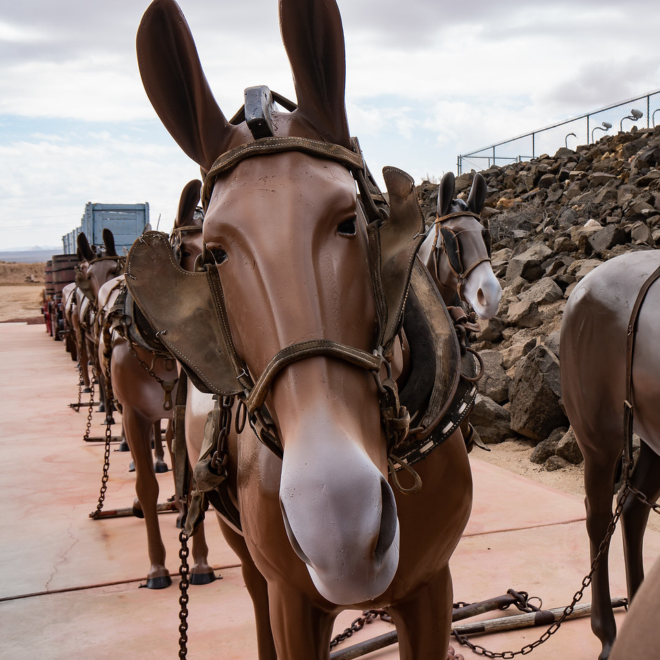 Twenty mules and wagons on display at the Borax Visitor Center