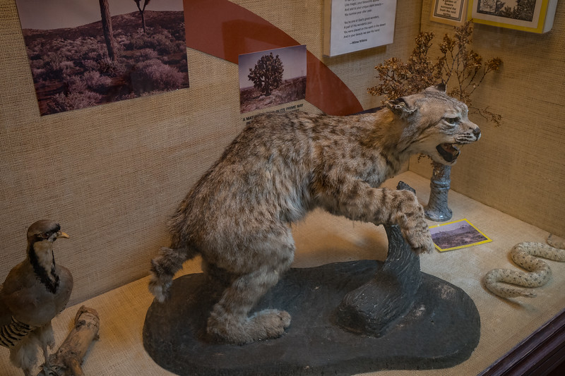 Mojave Desert wildlife on display