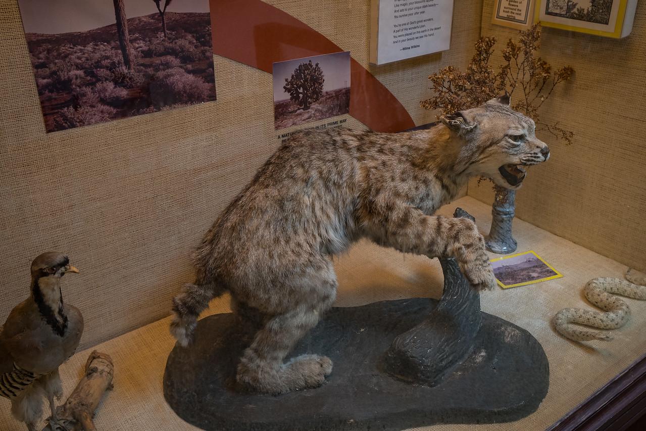 Mojave Desert wildlife on display