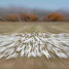 Snow geese zoom blur Bosque del Apache, New Mexico