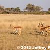 2012-Botswana-0730-3774