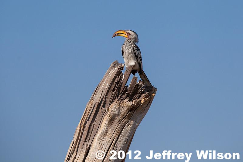 2012-Botswana-0801-4466