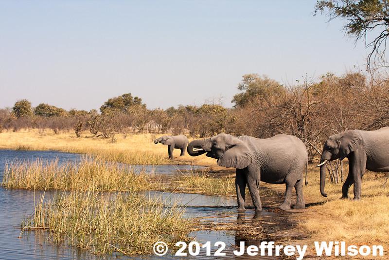 2012-Botswana-0724-0612