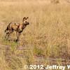 2012-Botswana-0731-4169