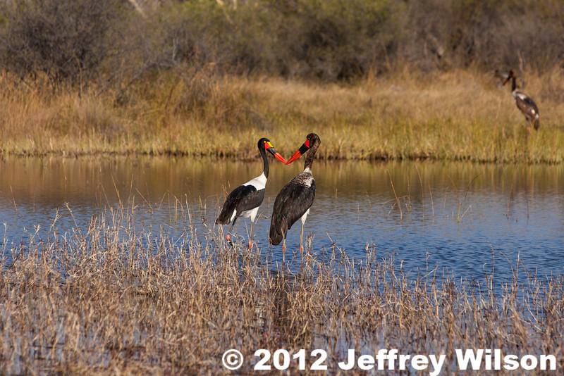 2012-Botswana-0731-4346