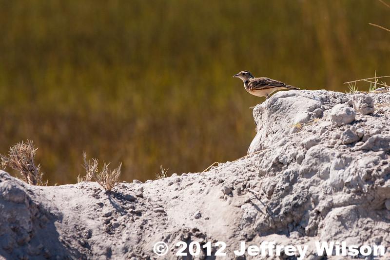 2012-Botswana-0722-9950