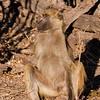 2012-Botswana-0723-0289