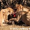 2012-Botswana-0724-0569