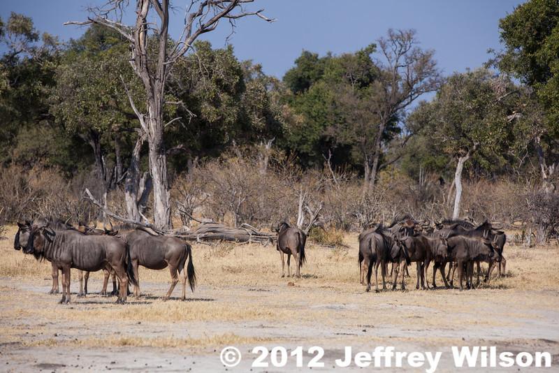 2012-Botswana-0801-4552