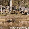 2012-Botswana-0727-2176