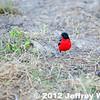 2012-Botswana-0728-2956