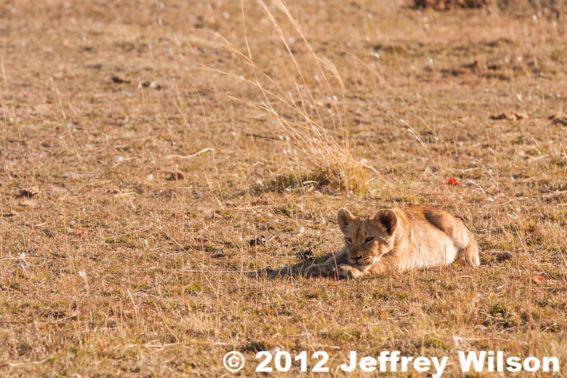 2012-Botswana-0724-0463