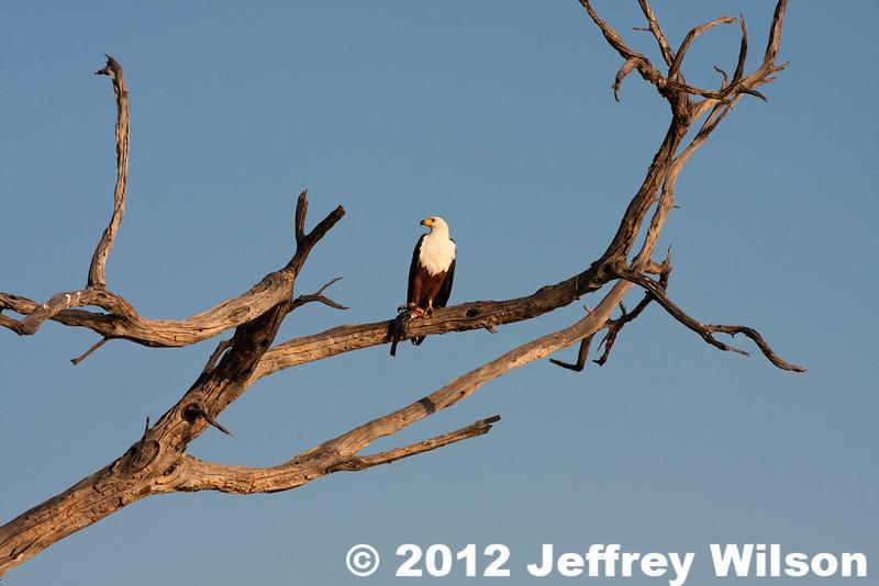 2012-Botswana-0724-1285