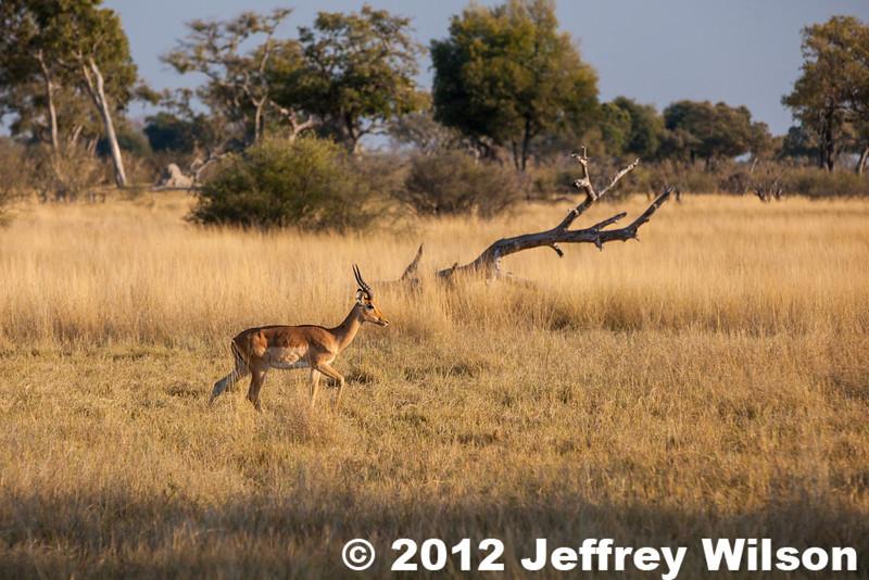 2012-Botswana-0730-3770