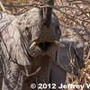 2012-Botswana-0731-4296