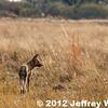 2012-Botswana-0731-4089