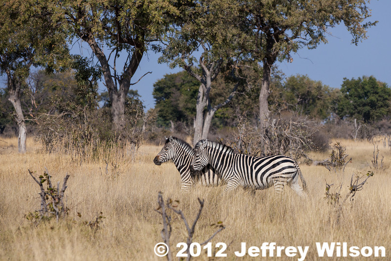 2012-Botswana-0801-4517