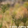 2012-Botswana-0722-9728